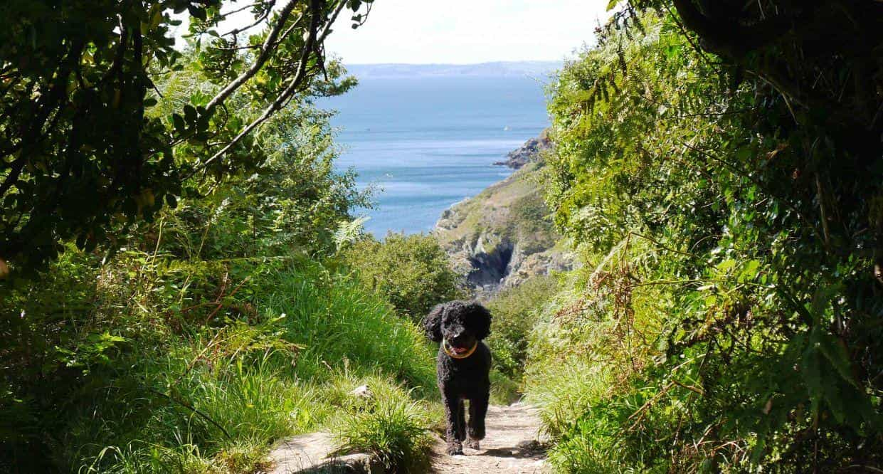 Dog Friendly Holiday Accommodation In Cornwall At Treworgey